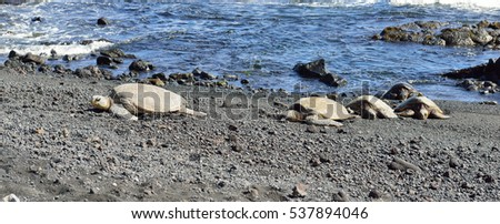 Punaluu black sand beach with turtles Big Island of Hawaii