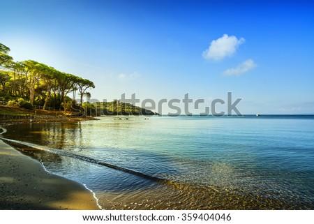 Punta Ala, Pine tree group, beach and sea bay. Tuscany, Italy Europe - stock photo