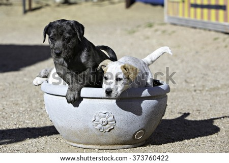 Puppies jumping out of a flower pot - stock photo