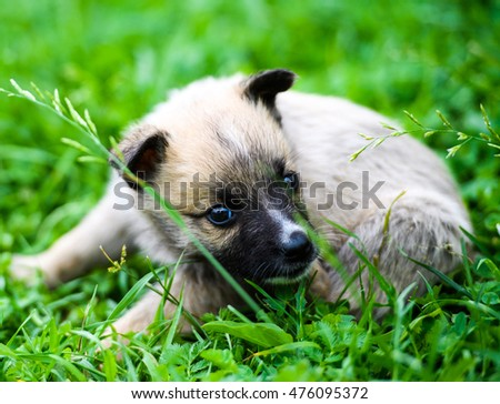 puppies playing on green grass