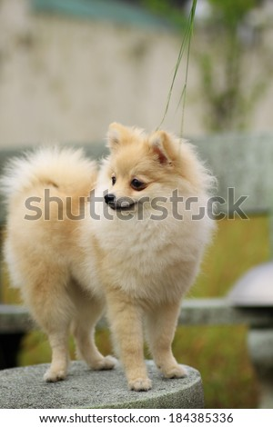 puppy - stock photo