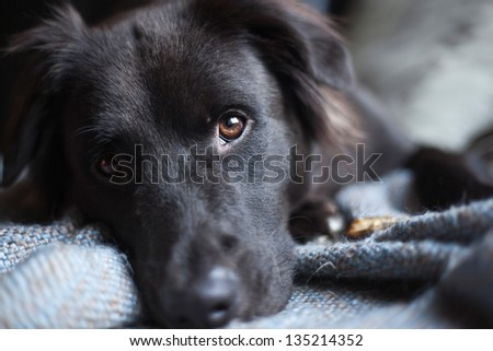 Puppy and Blanket - stock photo