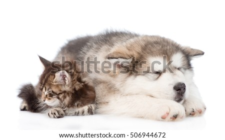 puppy and cat sleeping together. isolated on white background