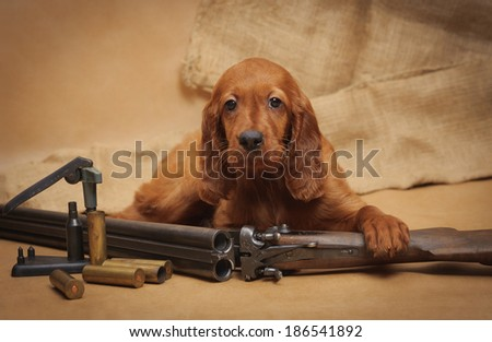 Puppy and hunting accessories, horizontal, studio - stock photo