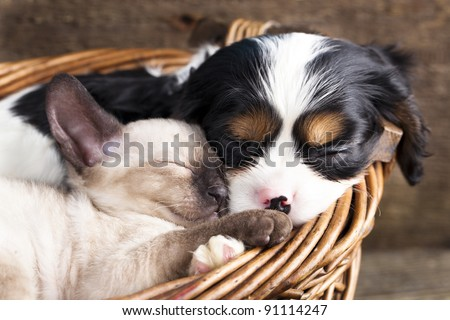 puppy and kitten - stock photo
