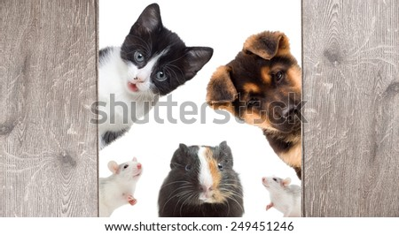 Puppy and kitten and rodent peek - stock photo