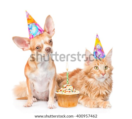 Puppy and kitten in birthday hats with cake. isolated on white background