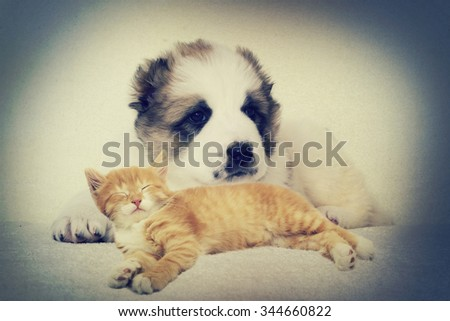 Puppy and kitten instagram - stock photo