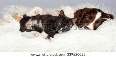 Puppy and Kitten Laying in Basket Together on a white fur blanket - stock photo