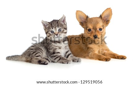 Puppy and kitten lying together. Cat and dog. - stock photo