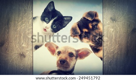Puppy and kitten peering - stock photo
