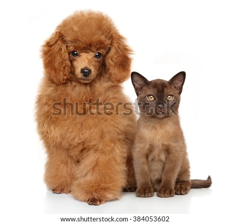 Puppy and kitten together in front of white background - stock photo