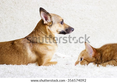 puppy and kitten watching - stock photo