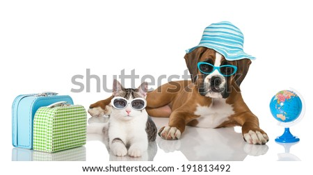Puppy and kitten with suitcase and  beach umbrella - stock photo