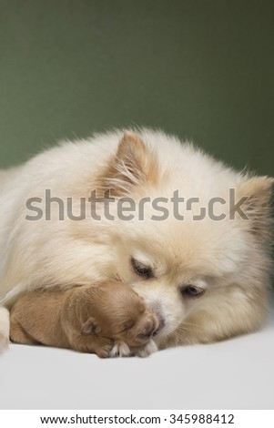 puppy and mom - stock photo
