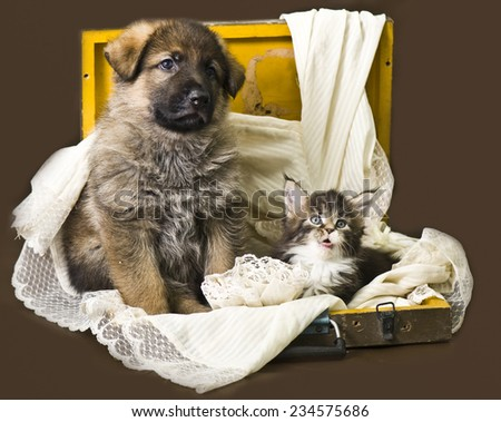 Puppy and pretty kitten - stock photo