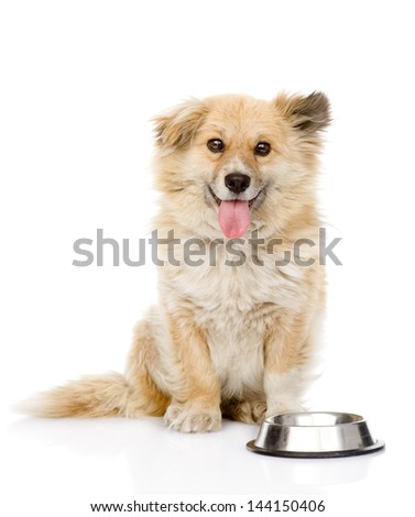 puppy begging for food. looking at camera. isolated on white background - stock photo