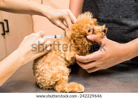 Puppy being vaccinated by a vet at the clinic - stock photo
