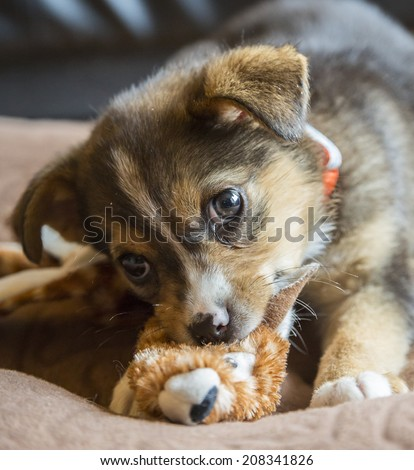 Puppy Chewing on Stuffed Toy - stock photo