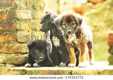 Puppy Dog - stock photo