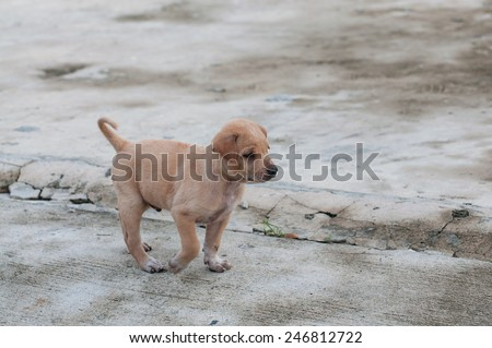 Puppy dog alone on the street - stock photo