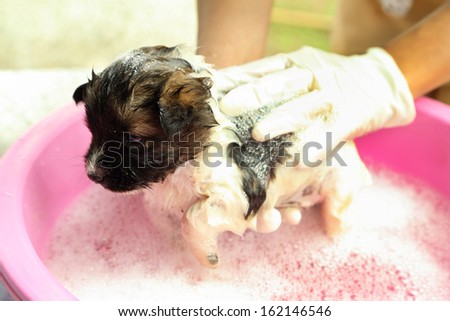 puppy dog in bath tub with hand washing its fur - stock photo