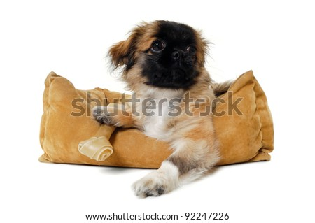 Puppy dog in dog bed. Taken on a white background