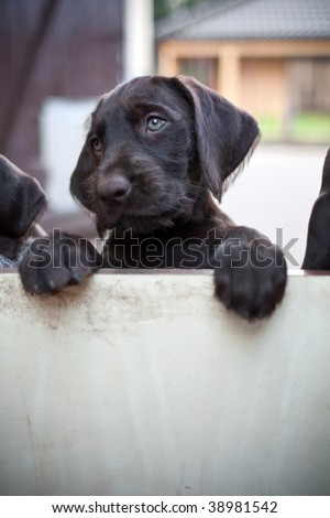 puppy dog needs someone to play with - stock photo