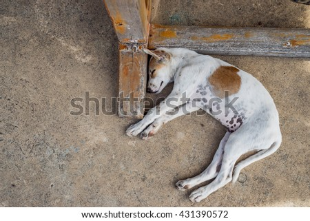 puppy dog sleeping beside a table  - stock photo