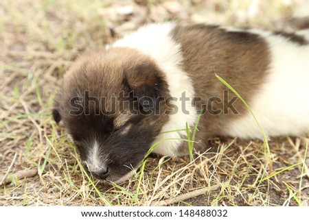puppy dog sleeping on the grass - stock photo