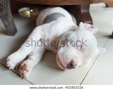 Puppy dog sleeping on tiled