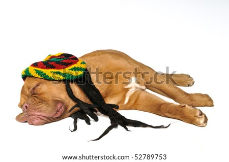 Puppy Dreaming in Rasta Hat With Dreadlocks Isolated - stock photo