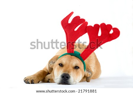 puppy dressed as a reindeer - stock photo