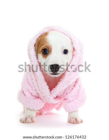 Puppy in a pink dressing gown - stock photo