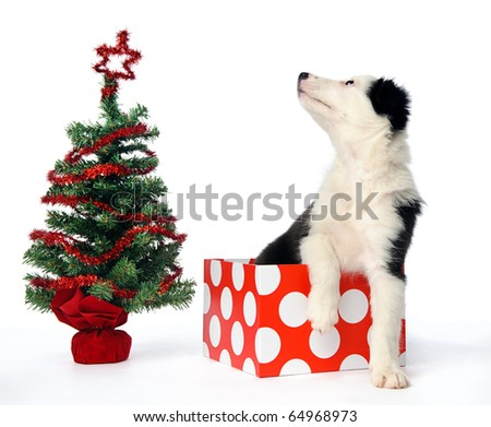 Puppy in christmas gift box next to xmas tree - stock photo