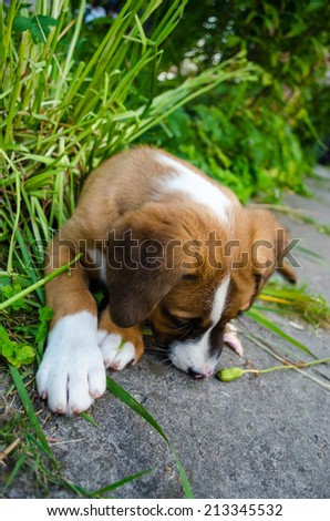 Puppy in the yard - stock photo