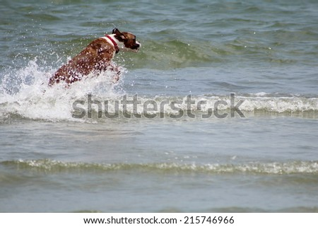 puppy in waves