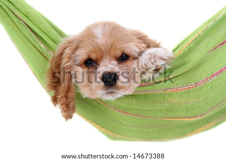 Puppy into hammock - stock photo