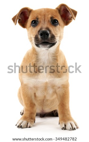 Puppy isolated on white - stock photo