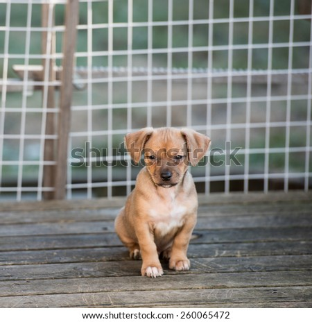 Puppy Kept inside Baby Gate - stock photo