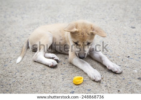 Puppy lay down on cement, floor and curious looking at lit. - stock photo