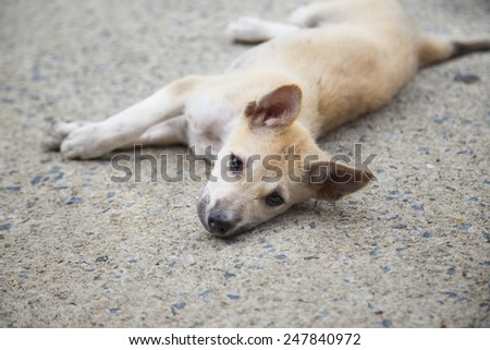 Puppy laydown relaxing on the ground - stock photo