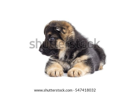 Puppy looking