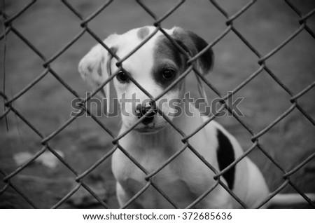 Puppy Looking Sad Through Fence - stock photo