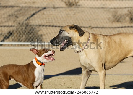 Puppy looking up to a Great Dane at the park while playing - stock photo