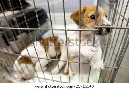 puppy looks through his cage awaiting adoption - stock photo