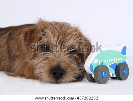 Puppy lying beside a wooden airplane toy - stock photo