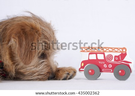 Puppy lying beside a wooden baby toy - stock photo