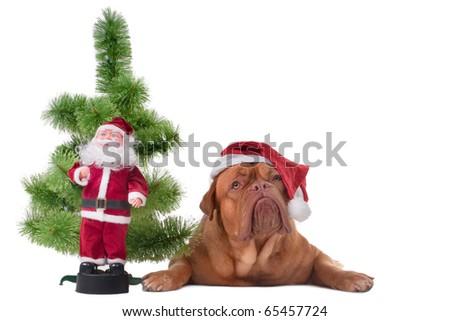 Puppy lying near a small Christmas tree - stock photo