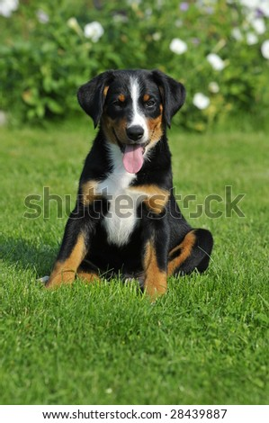 Puppy on a grass
